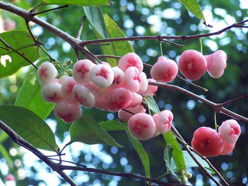 Beeren im Sonnenlicht lizenzfreies stockbild