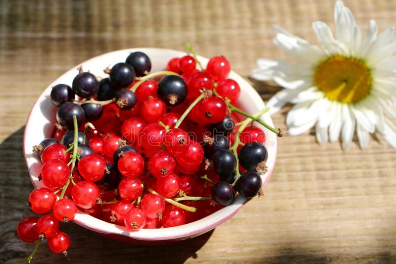 Beeren von roten und Schwarzen Johannisbeeren stockbild