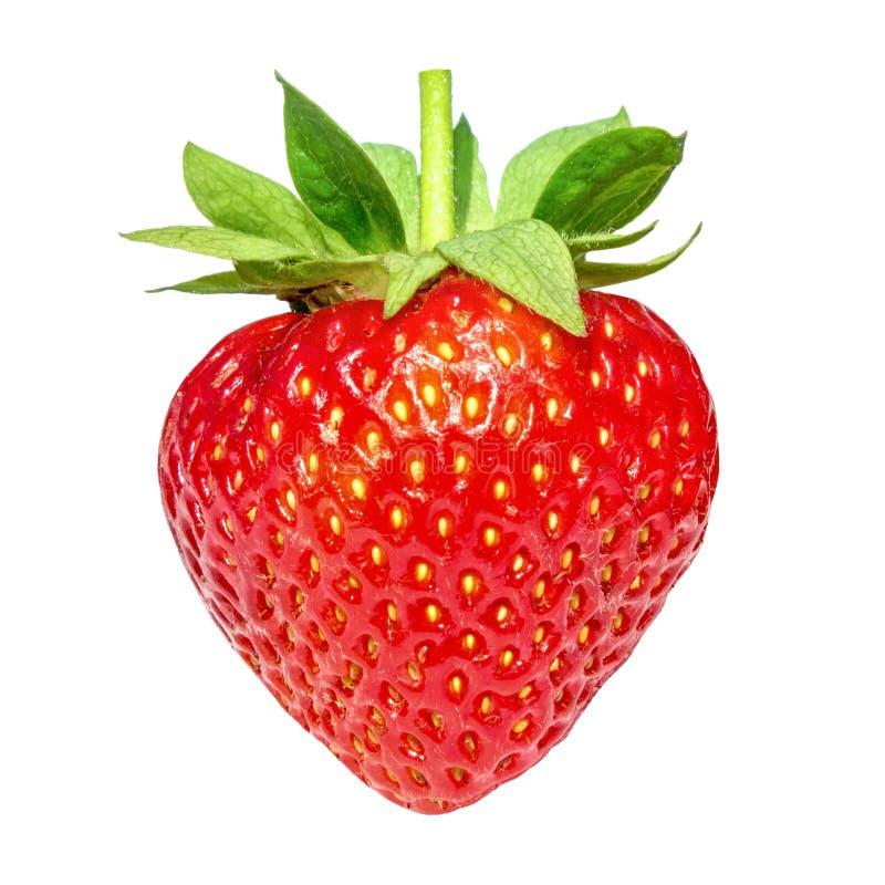 Beerenerdbeere lokalisiert auf weißem Hintergrund lizenzfreies stockbild