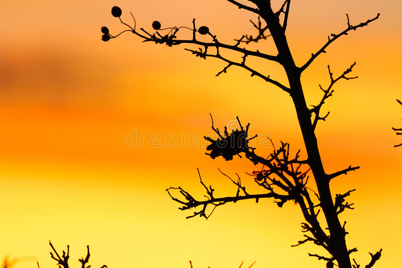 Download Beeries In December Sunset So Lovely Stock Photo - Image: 83708526