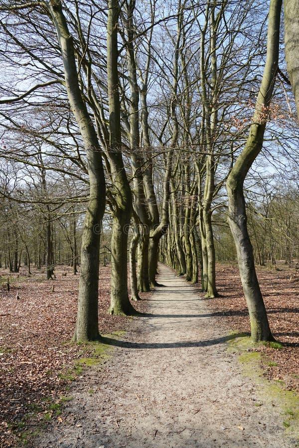 Beerschoten forest, the Netherlands. Forest area called Beerschoten near the villages of Bilthoven and De Bilt in the Netherlands stock images