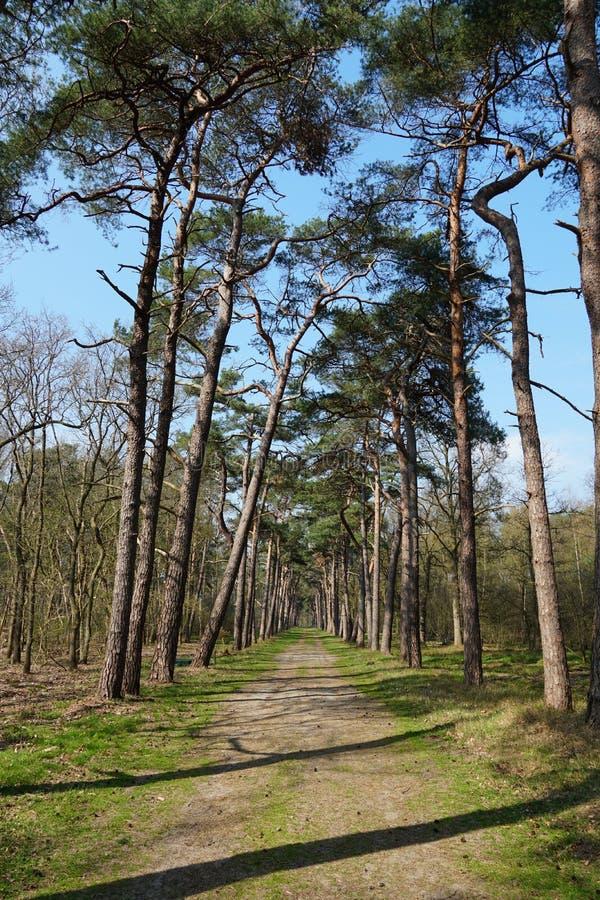 Beerschoten forest, the Netherlands. Forest area called Beerschoten near the villages of Bilthoven and De Bilt in the Netherlands stock photo