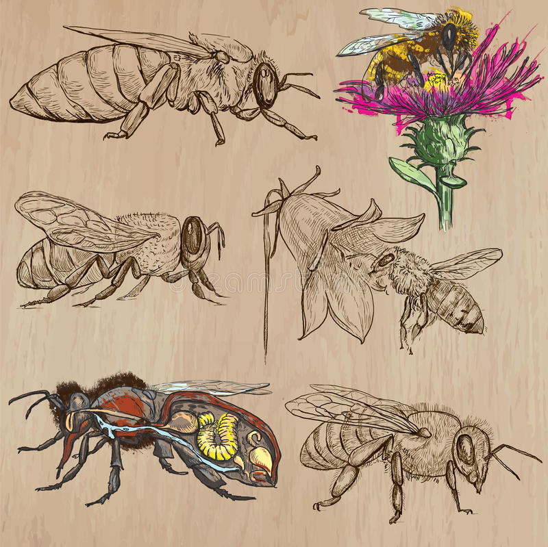 Bees, beekeeping and honey - hand drawn vector pack 2. BEES, BEEKEEPING and HONEY. Collection of an hand drawn vector illustrations (pack no.2). Each drawing stock illustration