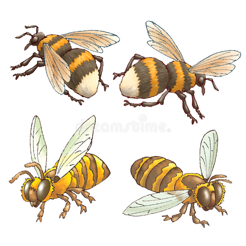 Download Bees and bumblebees stock illustration. Image of picture - 5884948