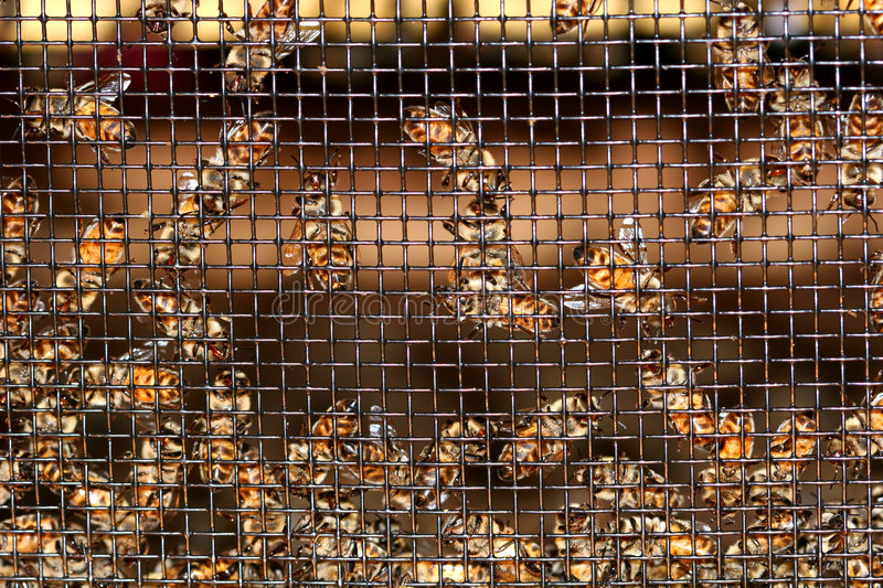Download Bees Buzzing stock photo. Image of imprisoned, hive, caged - 180334
