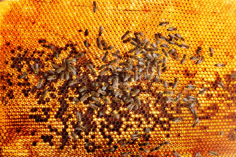Bees close-up on a frame for bees royalty free stock photography