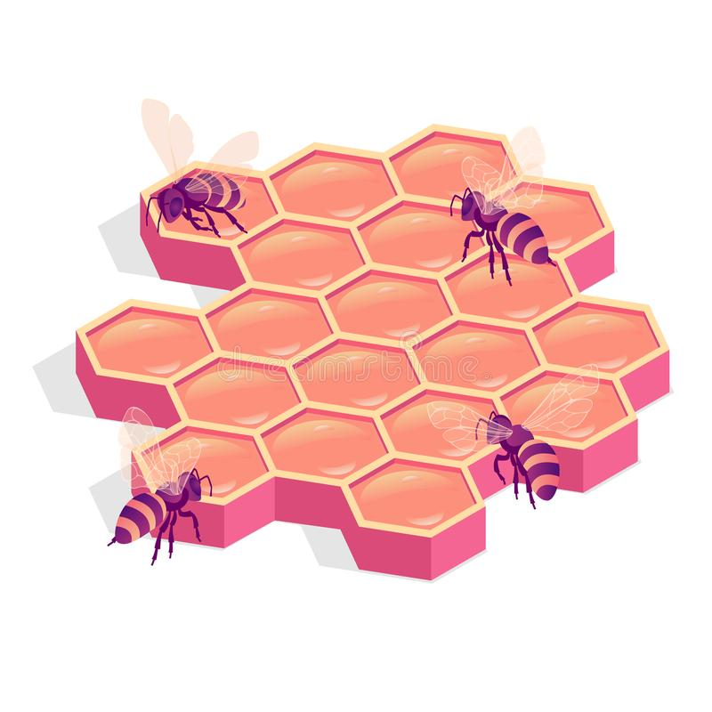 Bees on comb isolated vector isometric illustration. Sealed honeycombs. Bees crawl on honeycomb. royalty free illustration