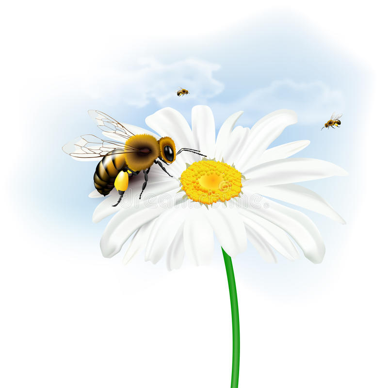Bees, daisy flower and sky with clouds. Still life with bees, daisy flower and sky with clouds on white background. Vector illustration vector illustration