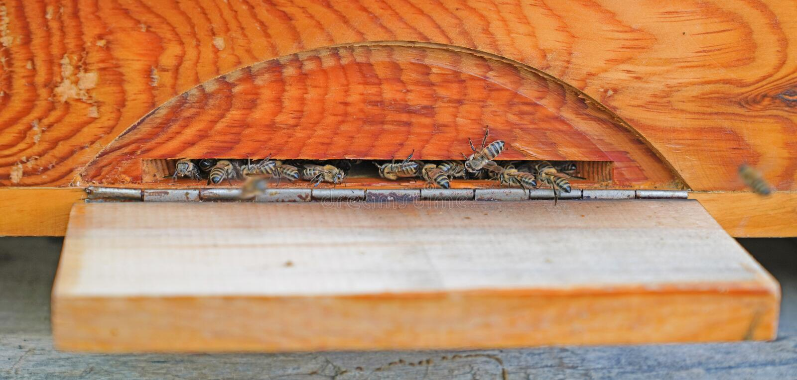 Bees entering the hive which is made of pine tree royalty free stock photo