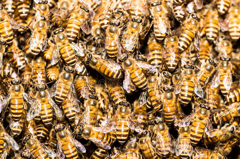 Bees. The ferocity of nature thumbprint And the symbol of teamwork stock photo