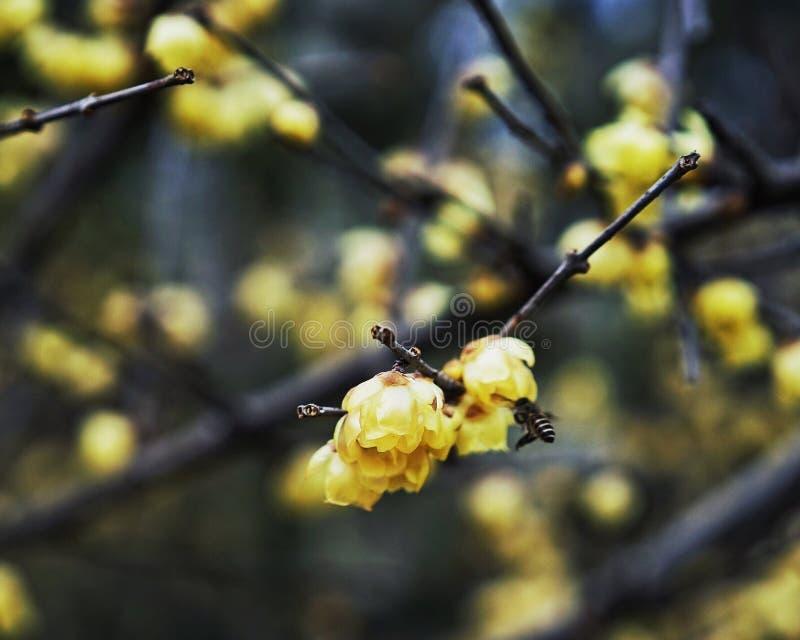 Bees&flowers photos stock