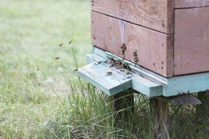 Bees fly to the hive to collect honey. Bee house in the apiary. Beekeeping natural royalty free stock photography