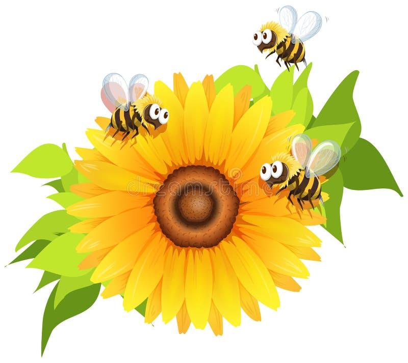 Bees flying around sunflower stock illustration