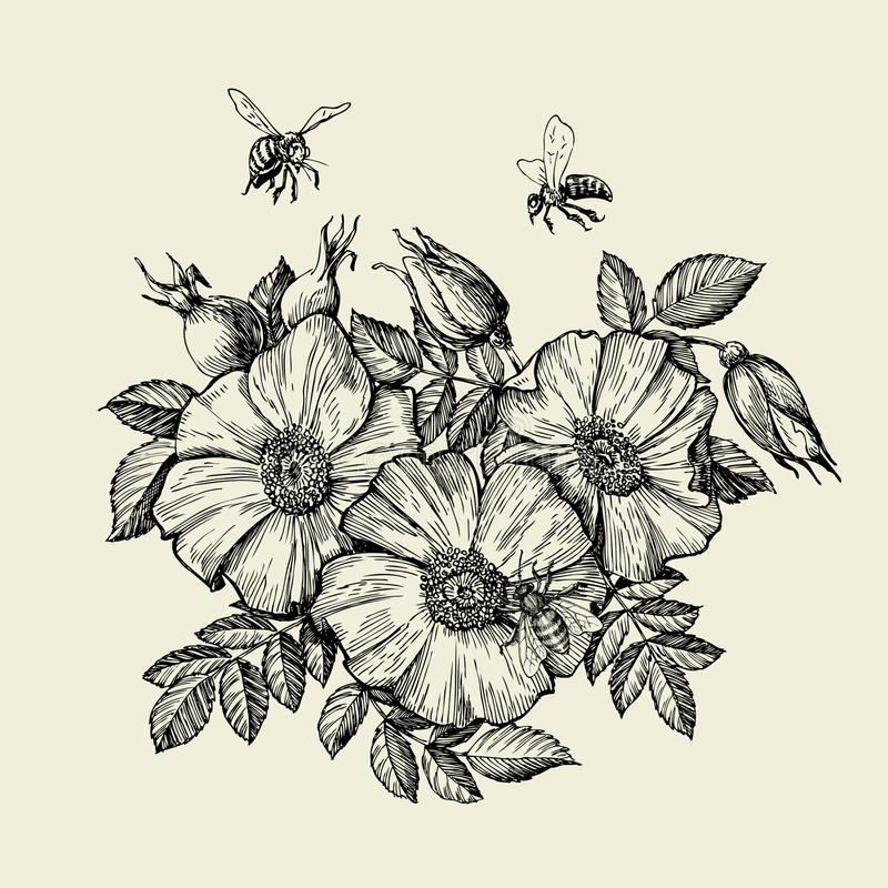 Bees flying to the flower. Hand drawn beekeeping. Vector illustration stock illustration