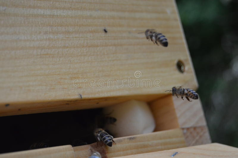 Bees flying to hive royalty free stock photography