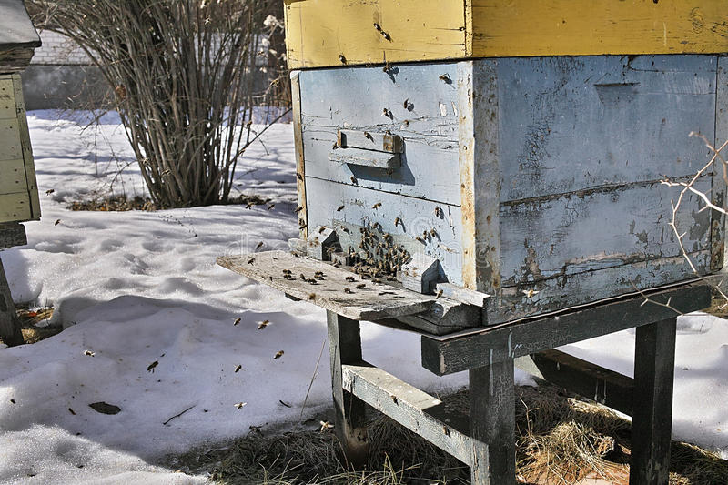 Bees Flying In A Winter royalty free stock photo