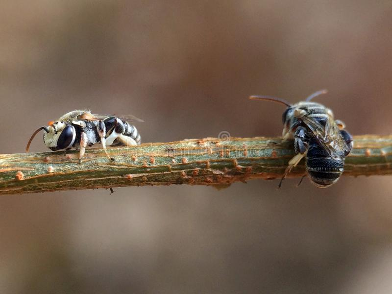 Bees hanging and rest on tree in morning royalty free stock photos