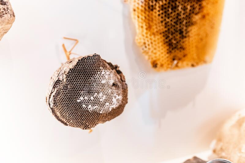 Bees hive and wasp nest at the exhibition. Bees hive and wasp nest at the museum exhibition royalty free stock photography