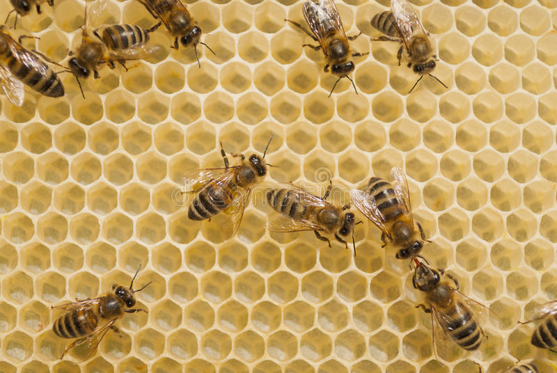 Bees and honey. stock images