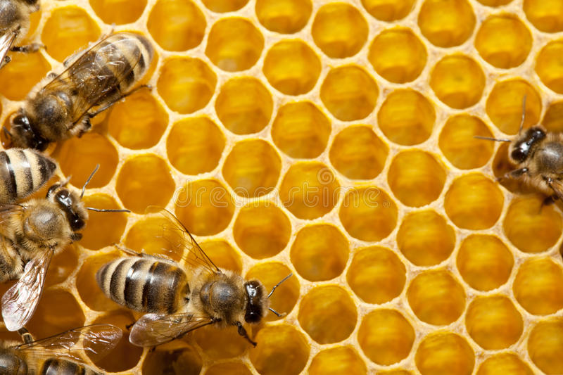 Download Bees on honeycells stock photo. Image of moving, cell - 9945156