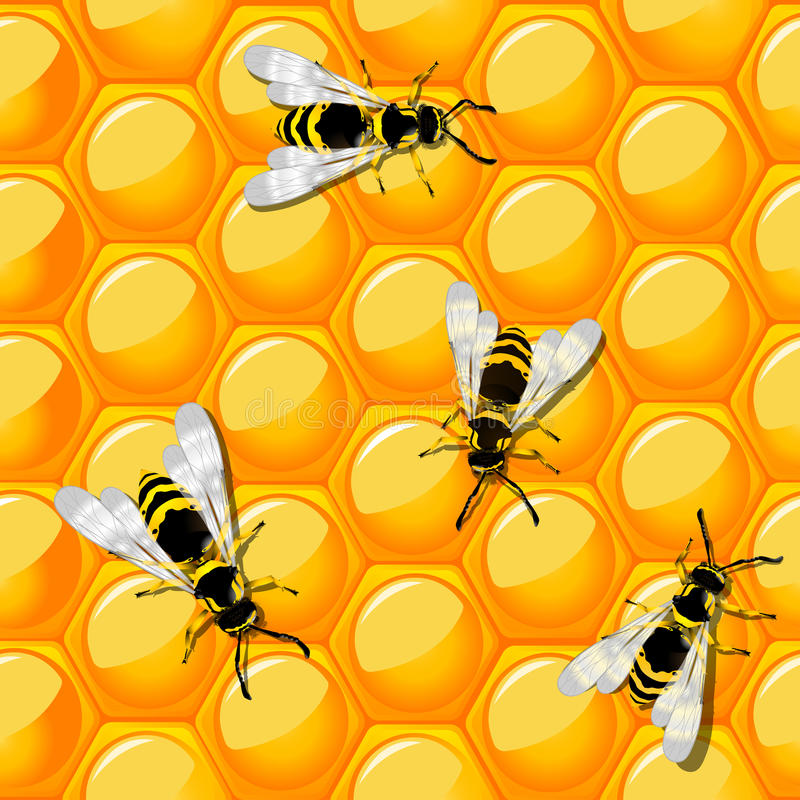 Bees and honeycomb. Seamless background design. Ready for print design, no meshes or transparencies used vector illustration