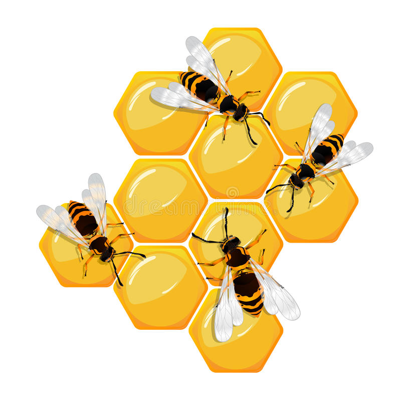 Bees on a honeycomb vector illustration