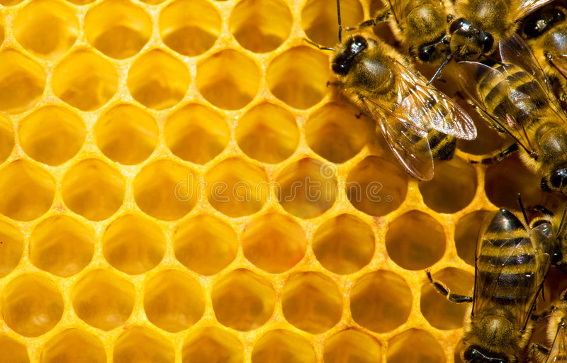 Download Bees on honeycomb stock image. Image of feverish, nature - 6777583