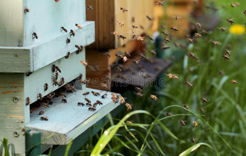 Download Bees Stock Photo - Image: 41384337