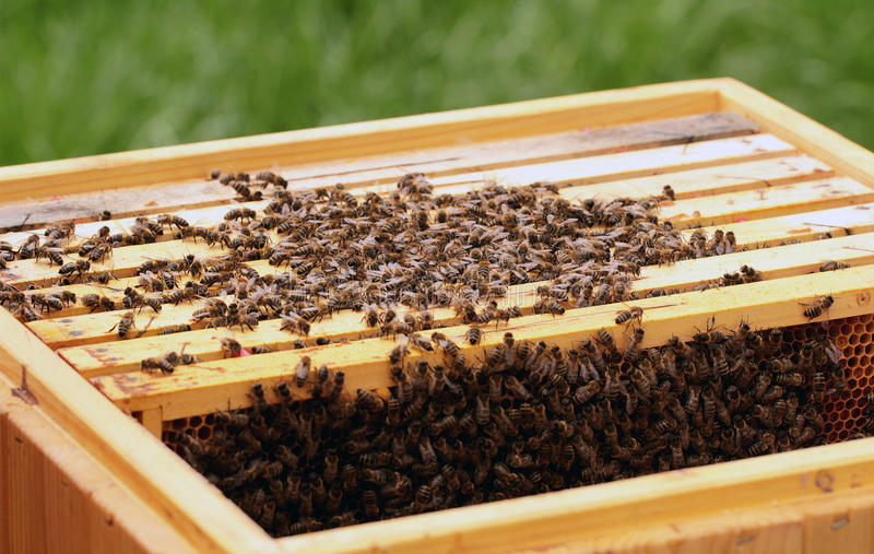 Download Bees stock image. Image of combing, golden, close, abstract - 41384347