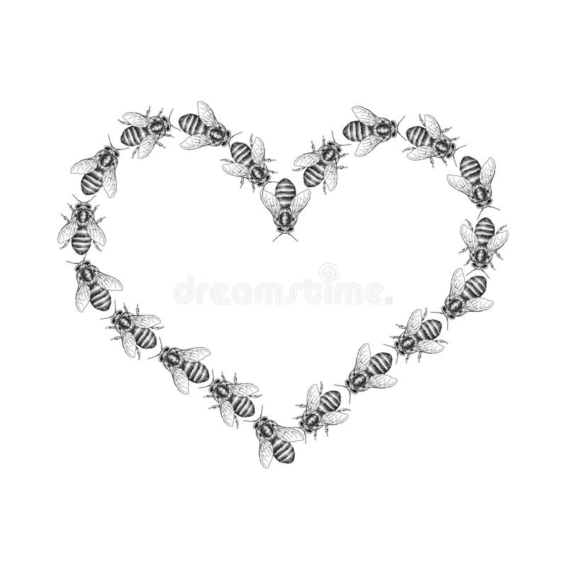 Bees are isolated on a white background. Seamless texture pattern. Realistic graphic illustration. Background with insects. For design. Form of a heart vector illustration
