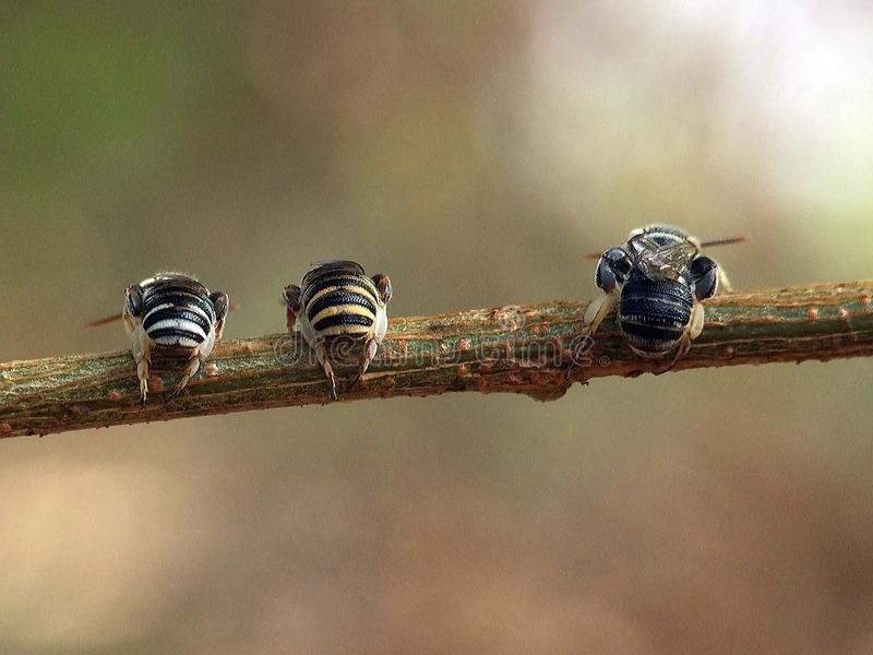 Resting area bees on tree royalty free stock photos