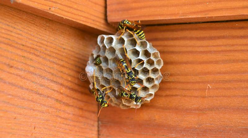 Bees on Small Hives. Bees circulating around on their small hives. Captured with woody background stock photo