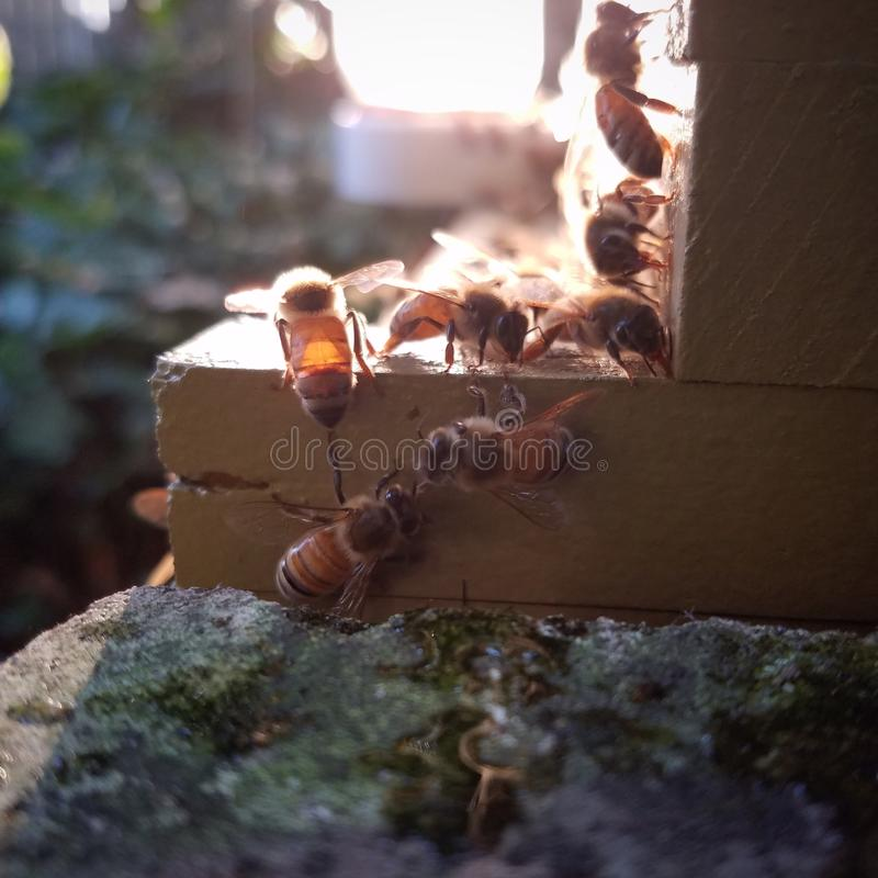 Bees in the sun! stock photo