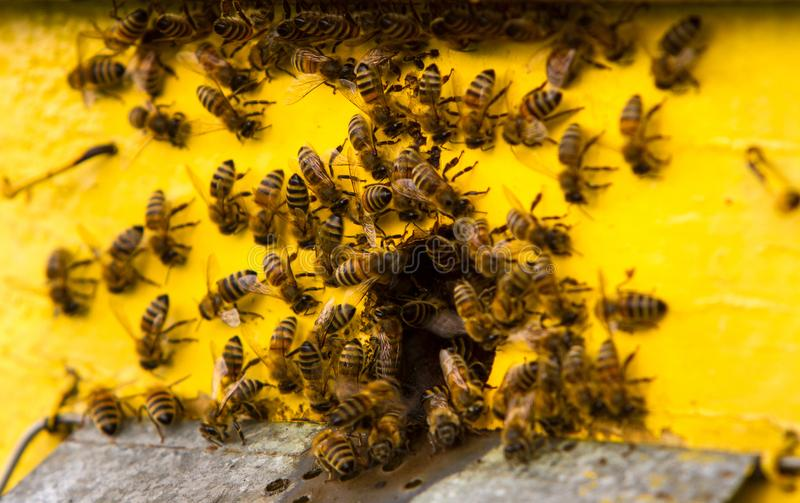 Bees and beehive royalty free stock image