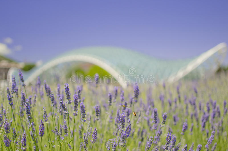 Bees in Tbilisi stock image