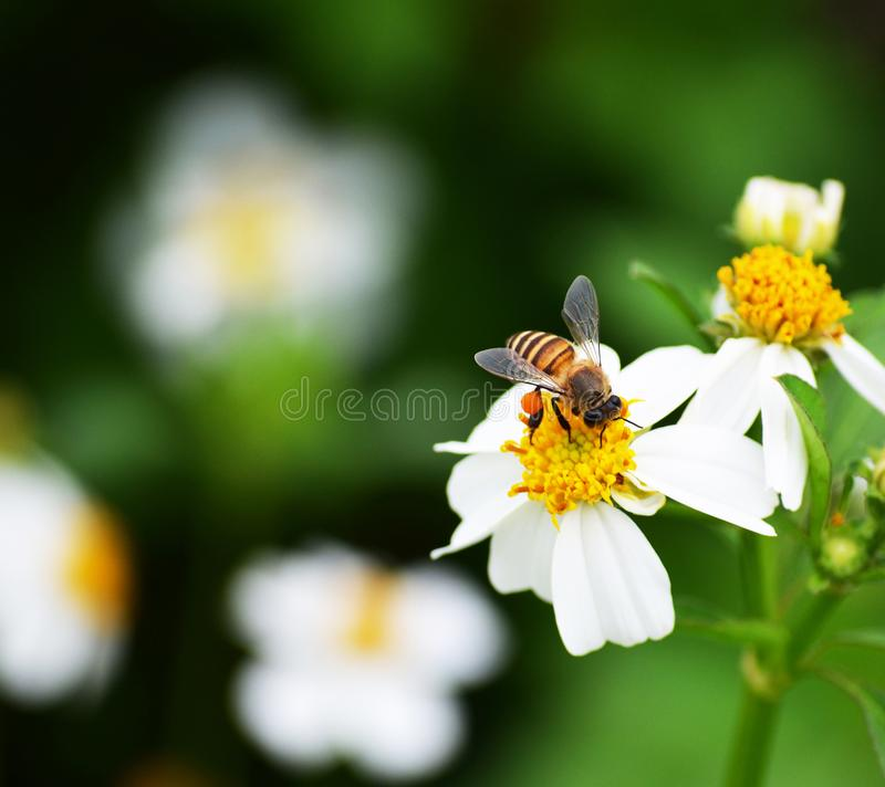 Bees to a flower. stock images