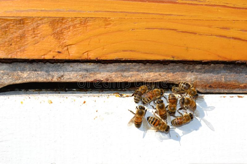 Bees on a Wooden Beehive royalty free stock photos