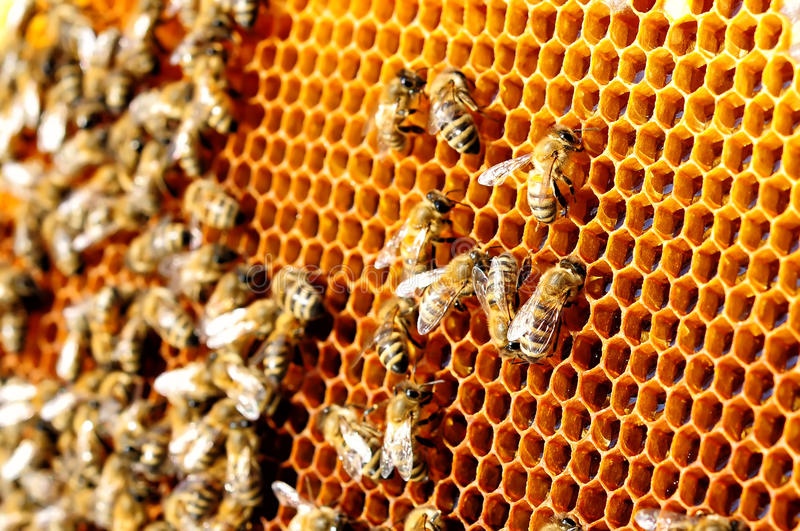 Bees work on honeycomb. Honey cells pattern. Apiculture. Bees work on honeycomb. Honey cells pattern. Apiculture stock photo