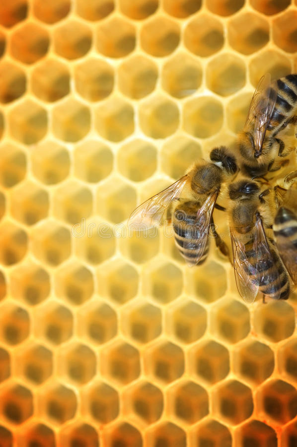 bees working arkivfoton