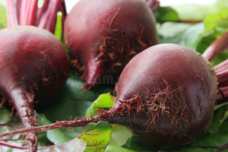 Beet. Red beet on green leaves stock images