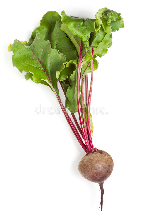 Beet. Isolated on a white royalty free stock photos