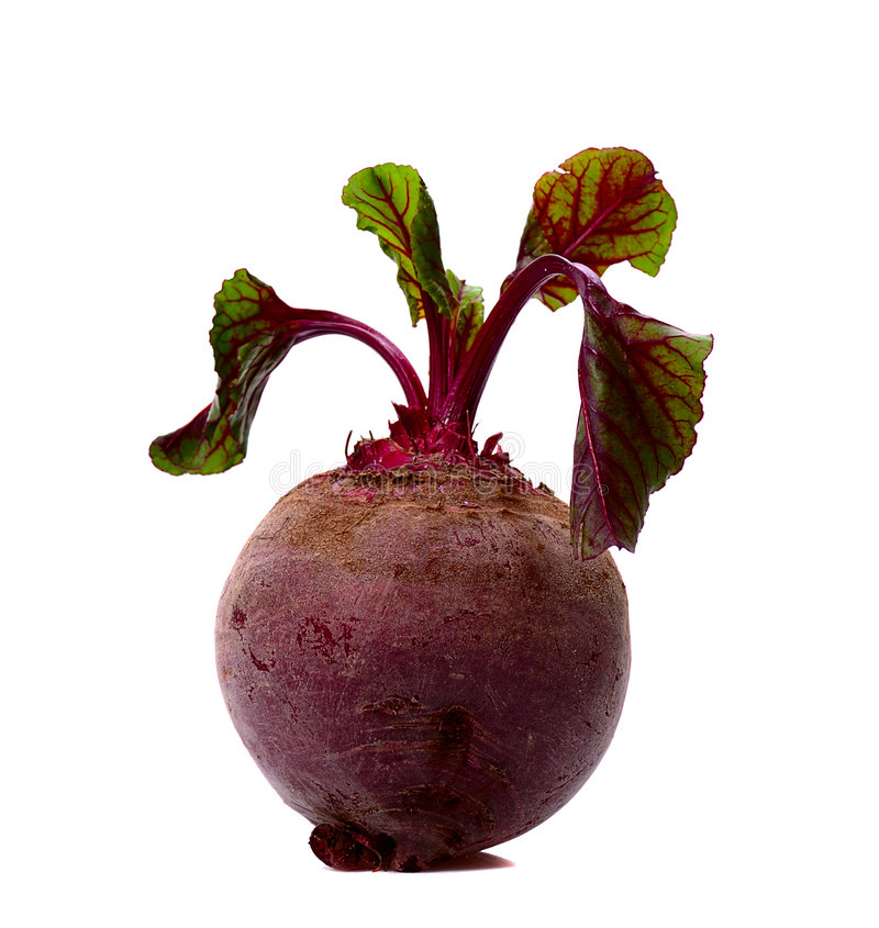 Beet. Single leafy beet isolated on white royalty free stock photo