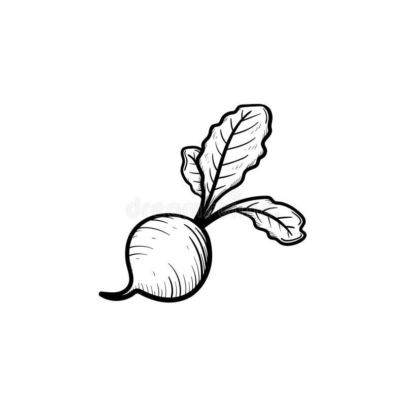 Beet hand drawn sketch icon. stock illustration