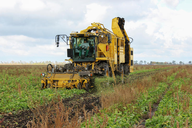 Beet harvesters in process royalty free stock images