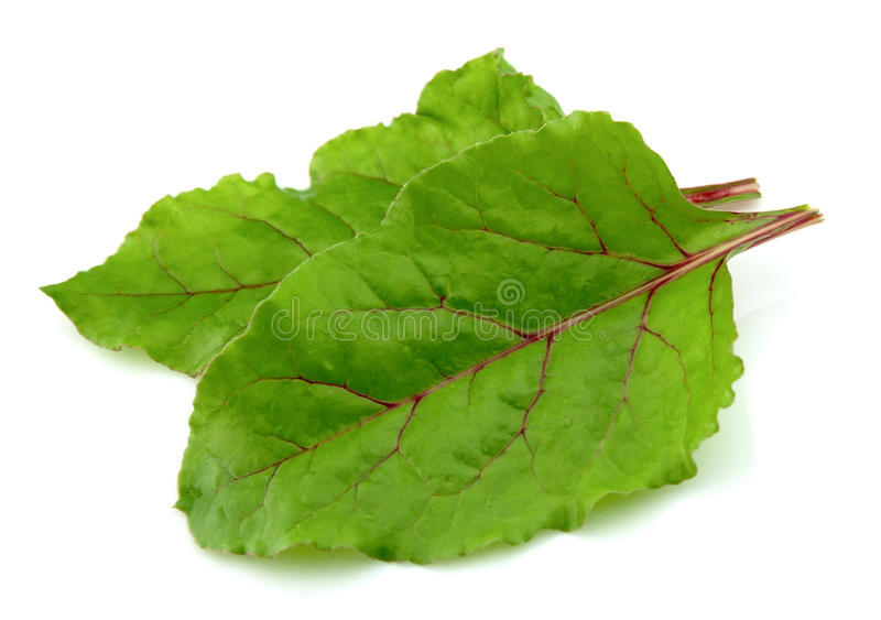 Beet leaves stock images