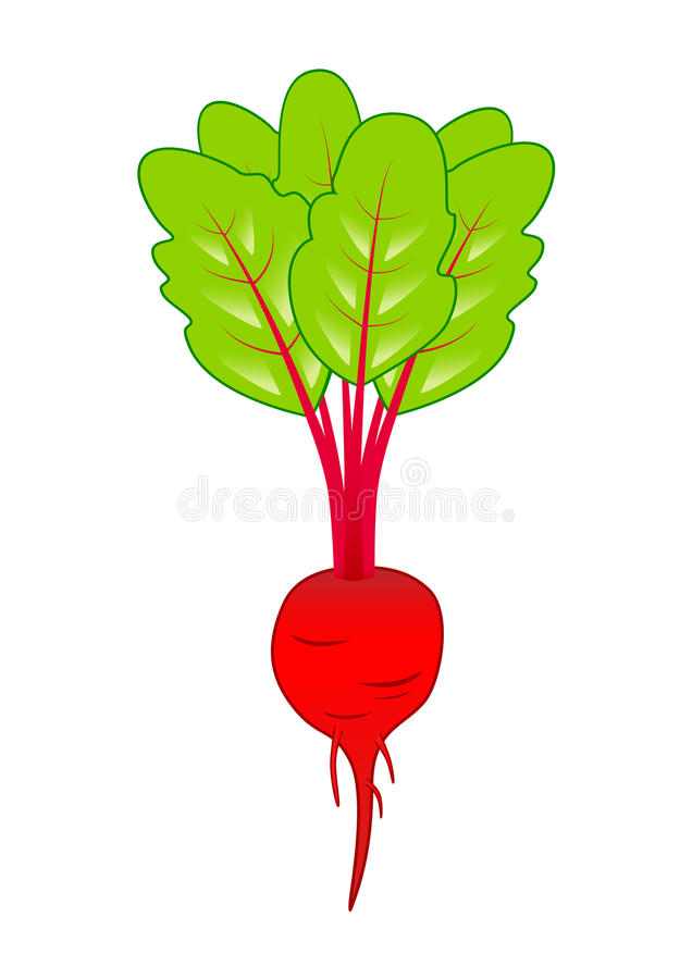Beet-root Royalty Free Stock Images