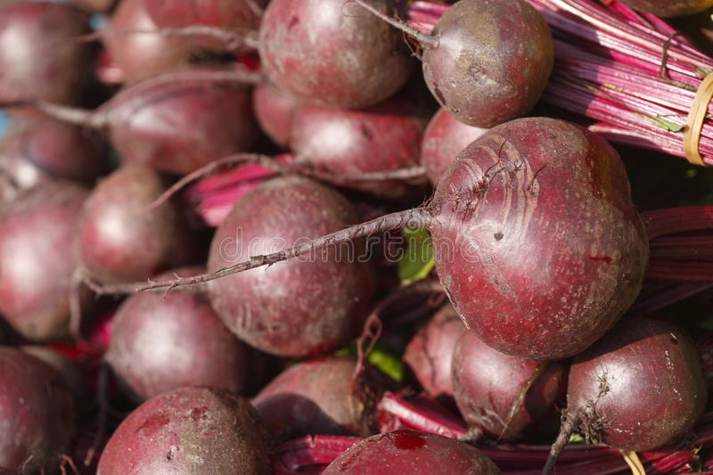 Beet roots. Red Beet roots Beta vulgaris vulgaris on a market stall royalty free stock photography