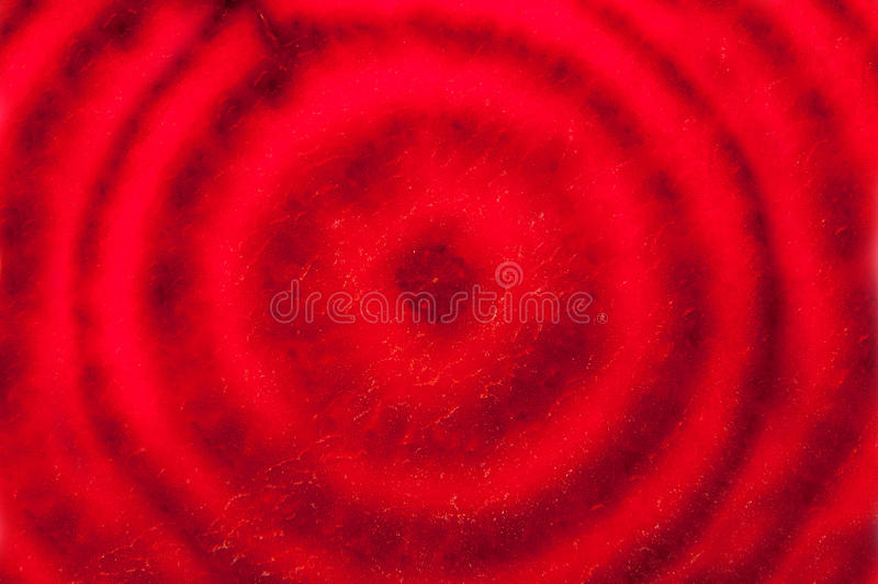 Beet slice. Red beetroot slice background. Macro photography stock image