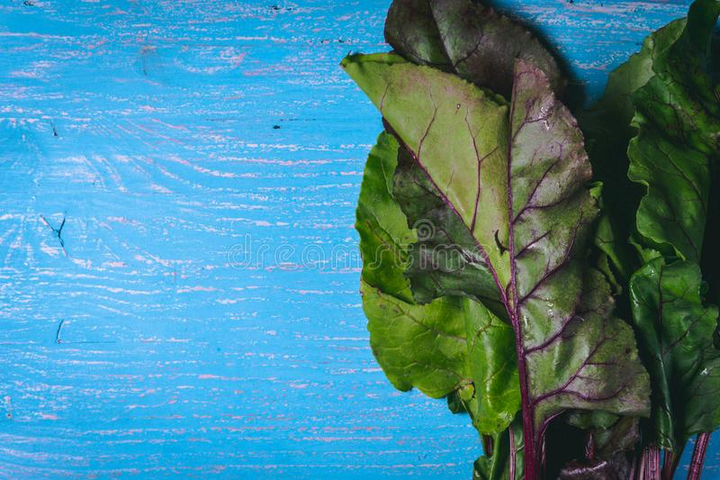 Beet tops on old blue wooden table. Copy space. Healthy food. Raw Vegetables royalty free stock photos