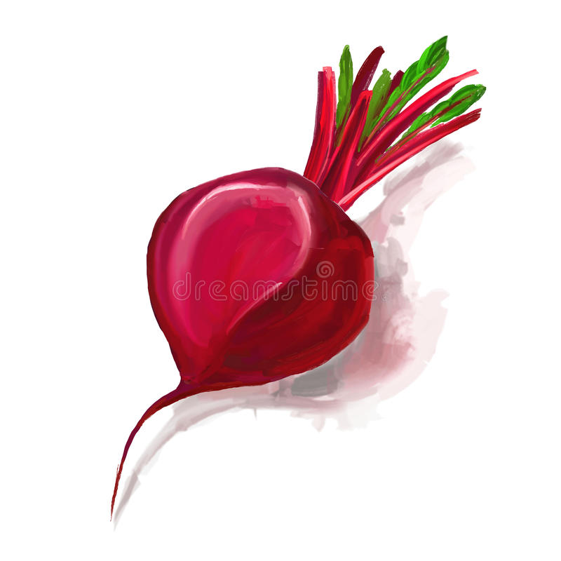 Beet vector illustration hand drawn painted royalty free illustration